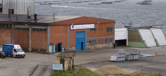 Eucosa atópase no litoral de Rande